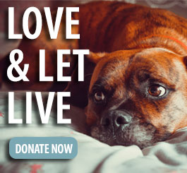 Love And Let Live Donate FP Promo